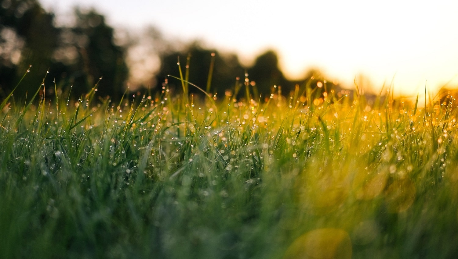 13 Best Grass Seeds to Plant in 2020 03