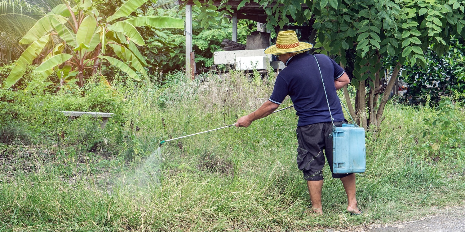 Asian man watering his garden., Farmer kills weed spraying pesticides in field by manual backpack sprayer., gardener kill the weed.