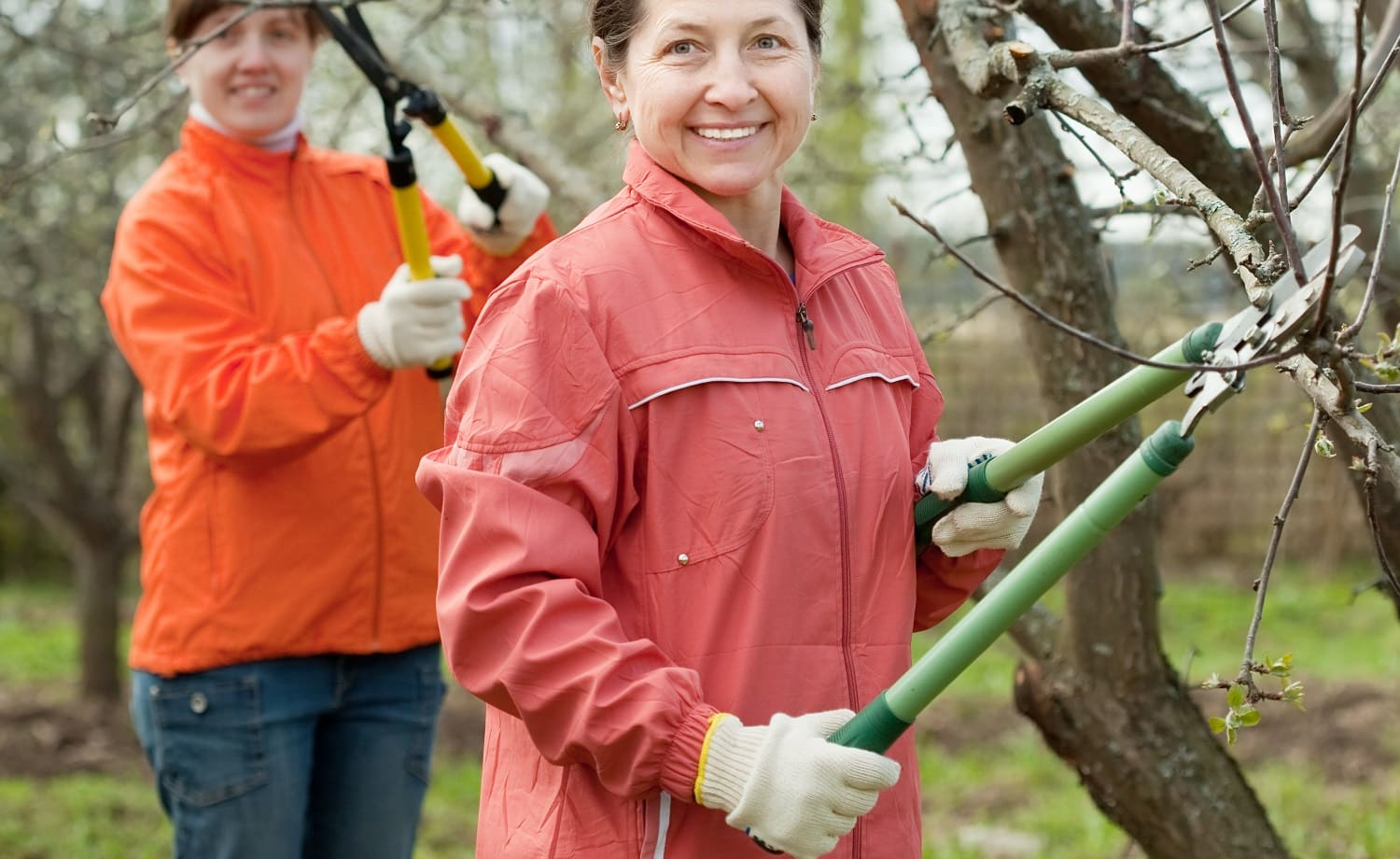 Two women pruned branches in the orchard in spring