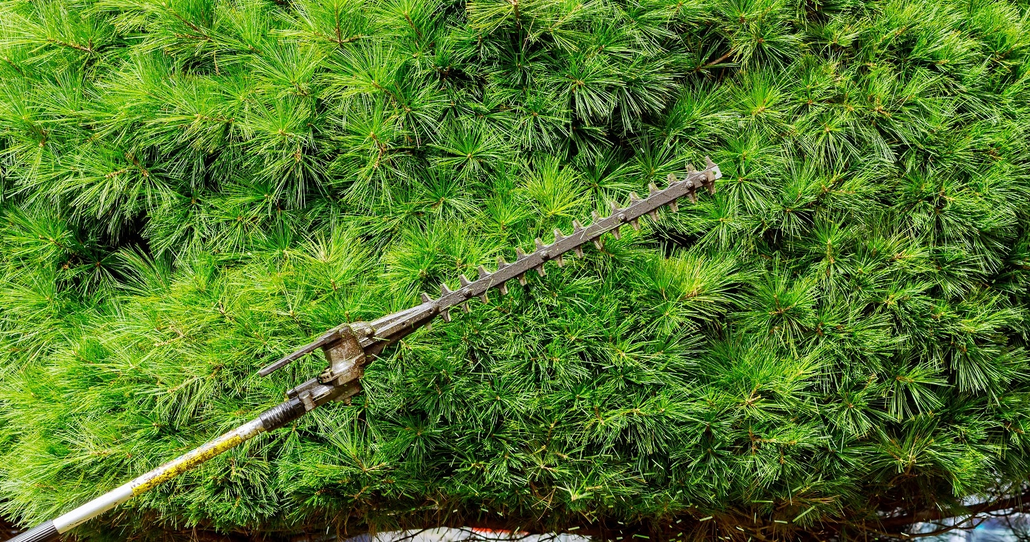 Pruning branches works in the garden, cuts tree branches and bushes.