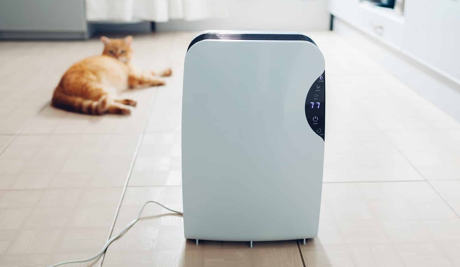 Dehumidifier with touch panel, humidity indicator, uv lamp, air ionizer, water container works at home while cat relaxing on kitchen. Air dryer