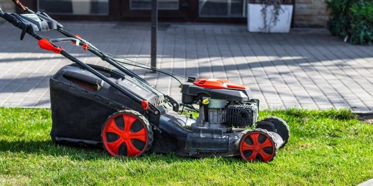 Lawn mower cutting green grass in backyard on a sunny day. Garden cleaning services.