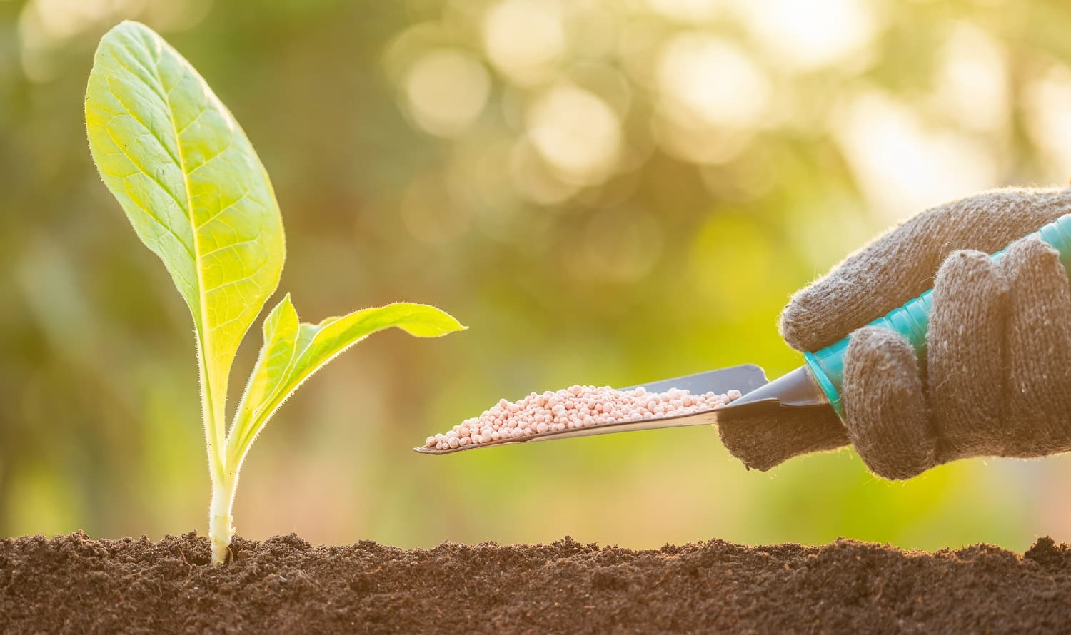 Close up hand giving fertilizer to young green sprout growing in soil on Green nature blur background.