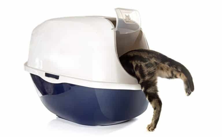 Closed cat litter box in front of white background