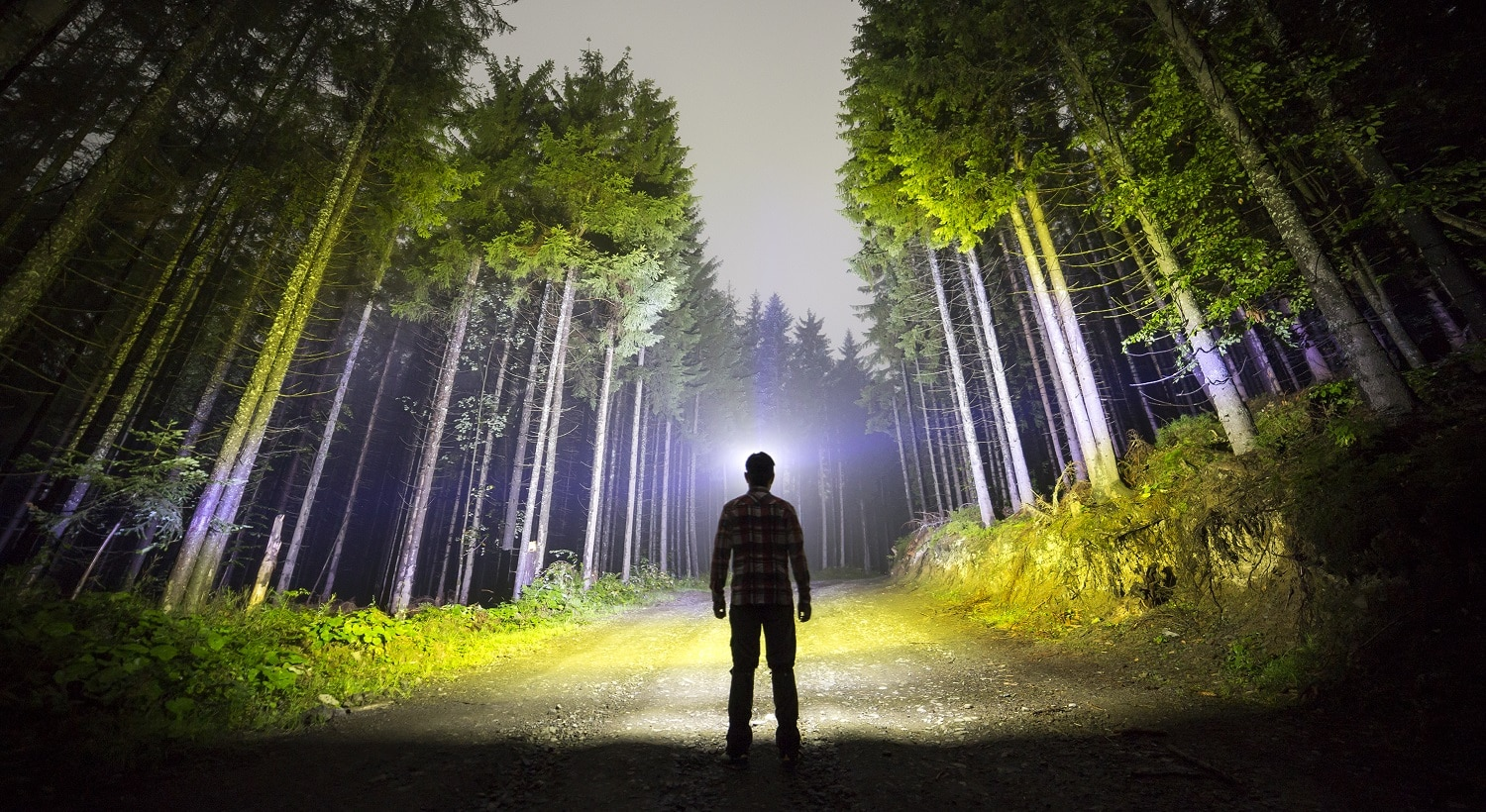 Back view of man with head flashlight standing on forest ground road among tall brightly illuminated spruce trees under beautiful dark blue sky. Night wood landscape and adventure.