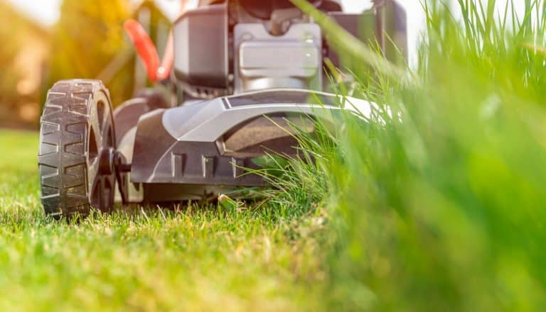motor mower to mow the lawn next to the family house. green grass