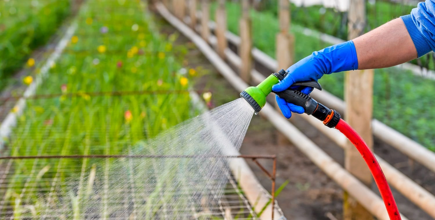Plant watering hose