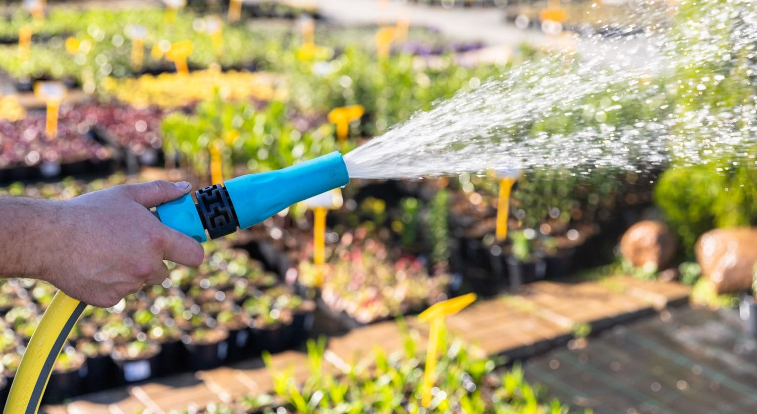 Gardener hand with garden hose watering plants, close up, sun light. Gardening concept