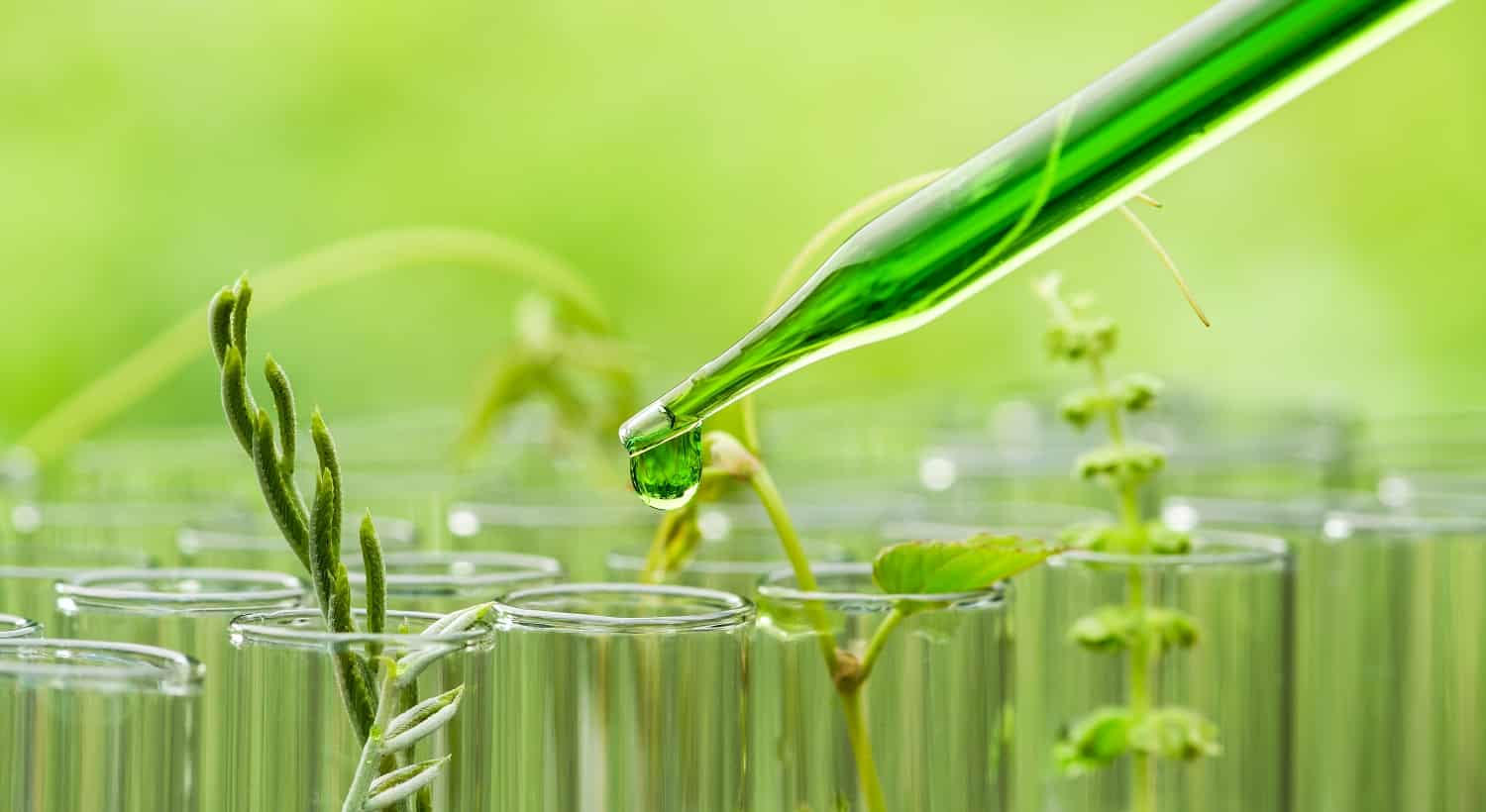 pipette dropping green sample chemical over young sample plant growing in test tube , biotechnology research concept