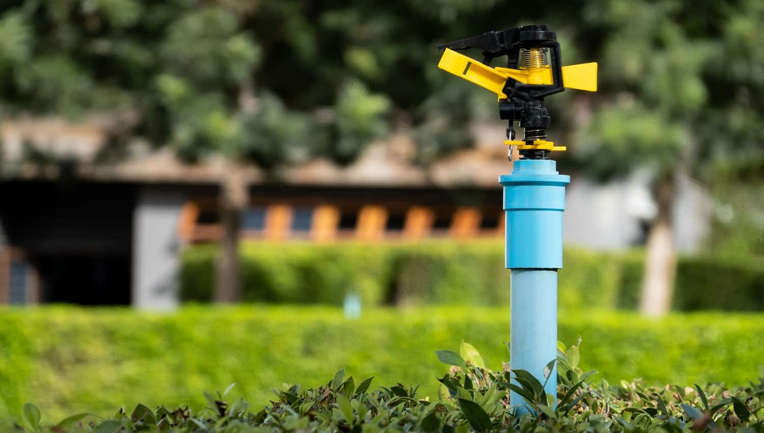 water pipe springer in garden, Agricultural farm, watering plants.