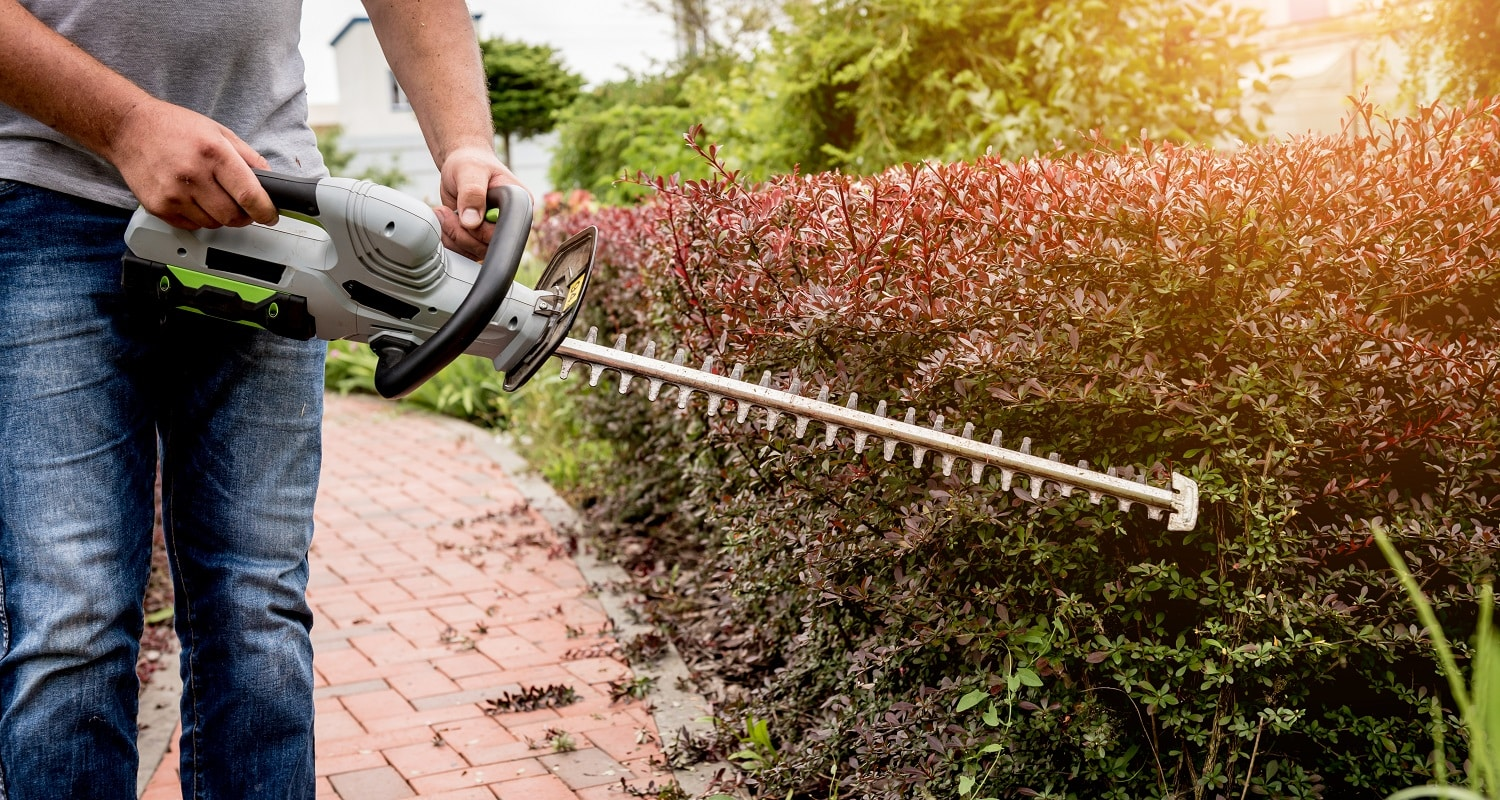 A gardener trimming shrub with hedge trimmer. Landscape design. Gardening