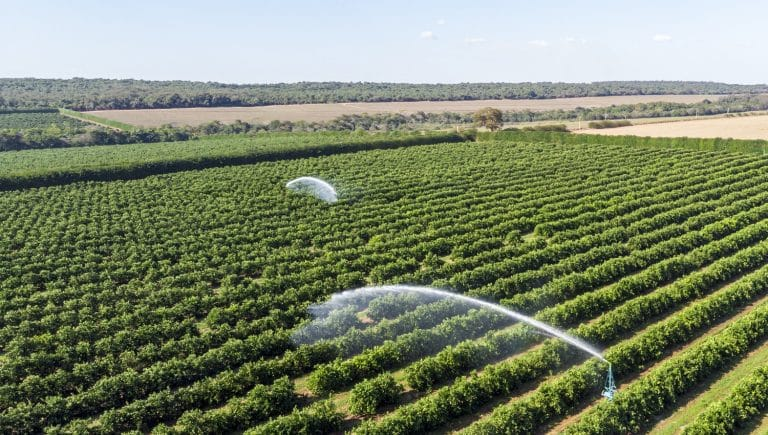 Irrigation in orange plantation on sunny day in Brazil.