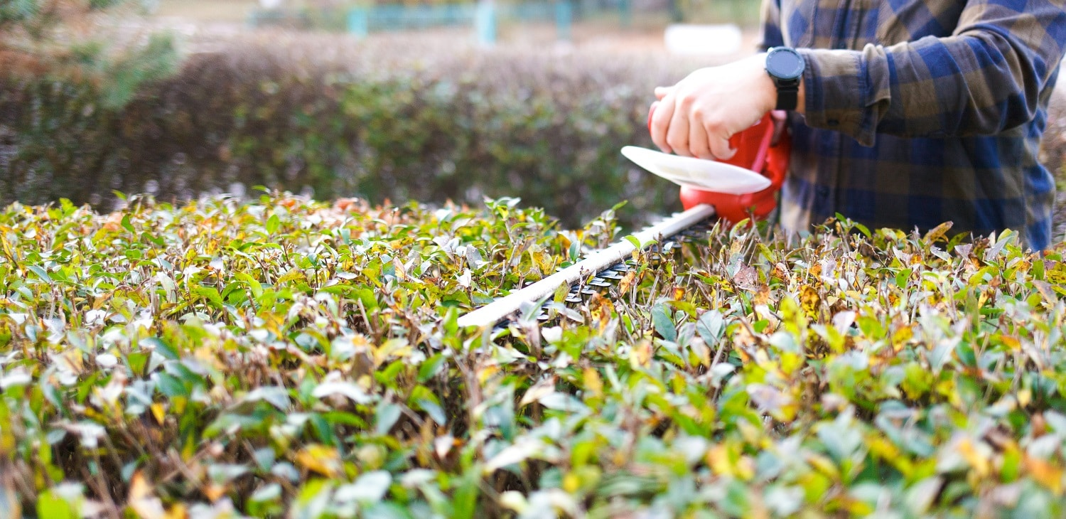 9 Best Small Hedge Trimmer of 2020 1