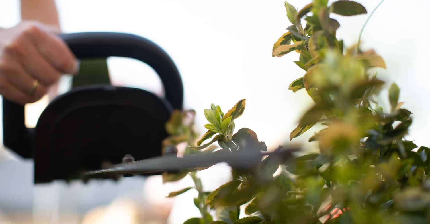 Cutting a hedge with electrical hedge trimmer. Selective focus. Gardener is trimming the hedge or tuja.