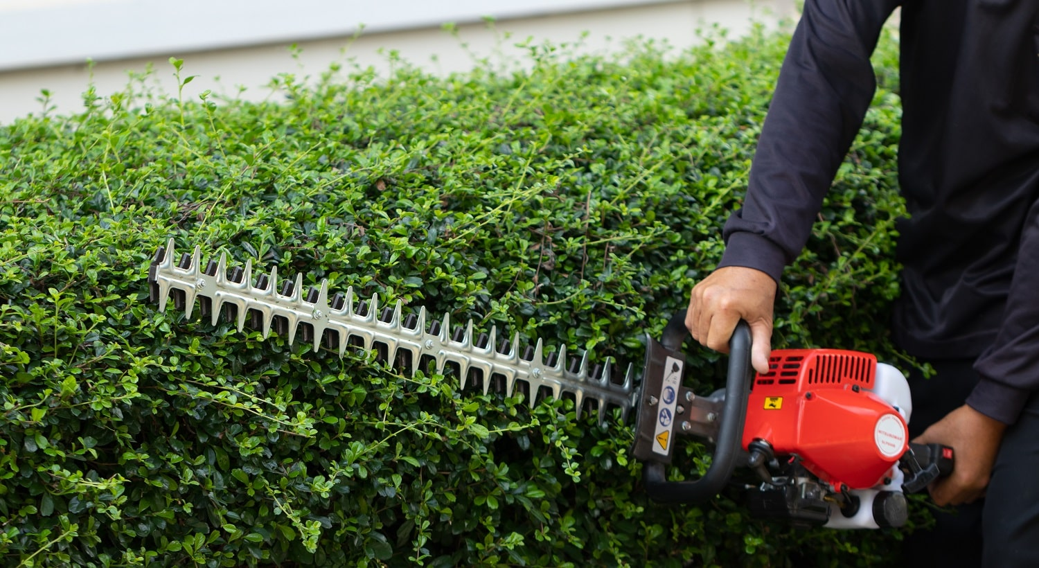 Home and garden concept. Hedge trimmer in action. Bush trimming work. Shrubs pruning. Gardening and cutting activities.