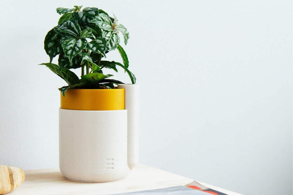 Plant stand by Parallel Goods