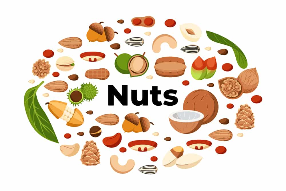 20 Types of Nuts | Benefits & Nutritional Information