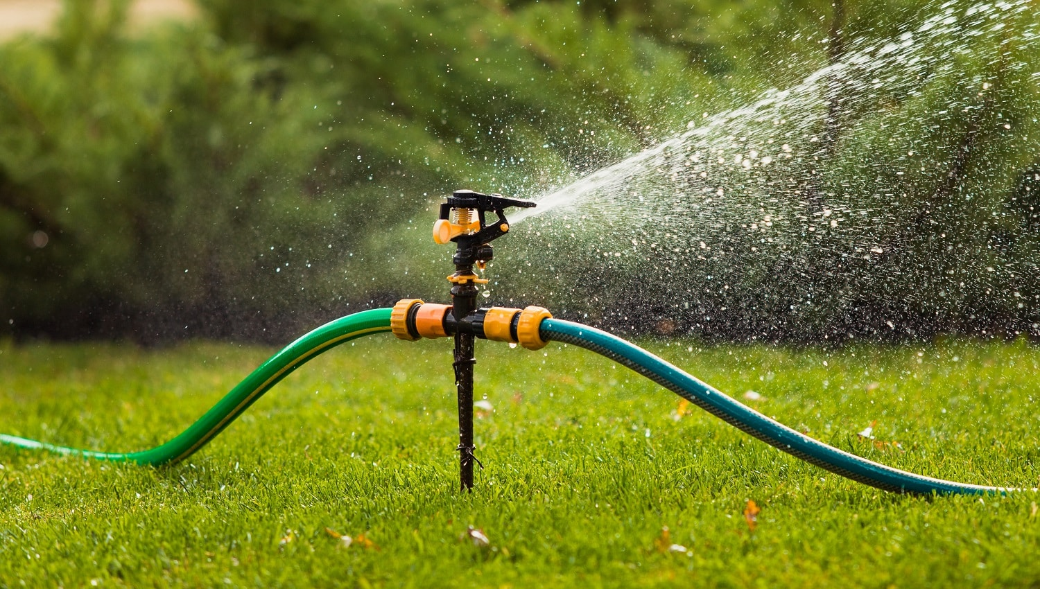 Watering lawn grass in the garden