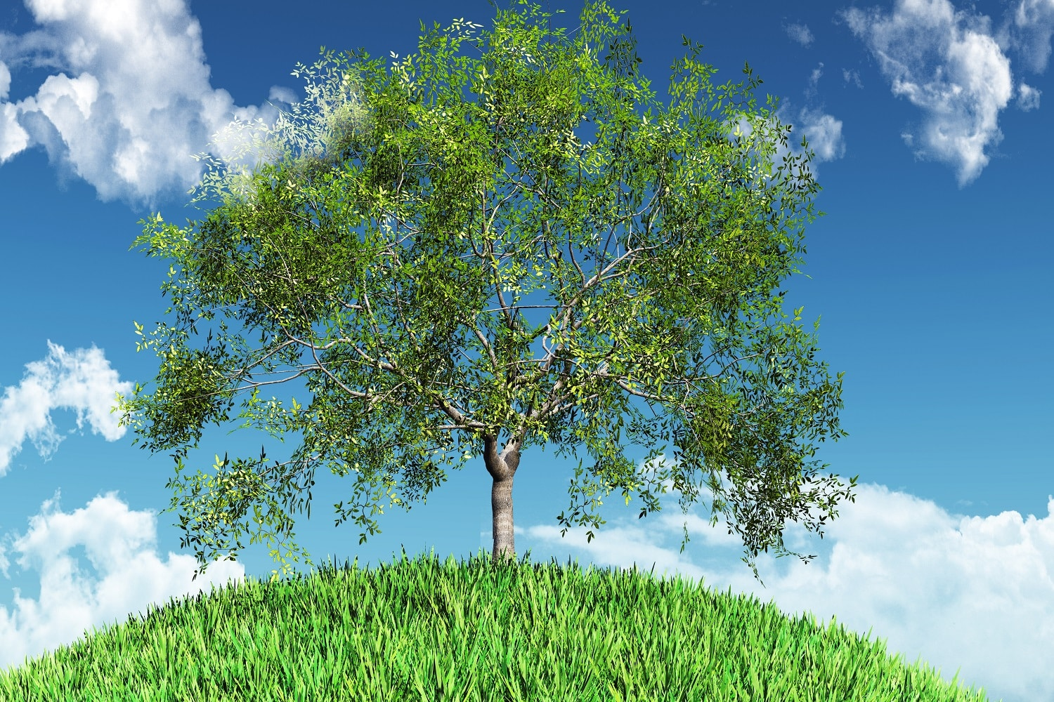 Different Types Of Willow Trees 2