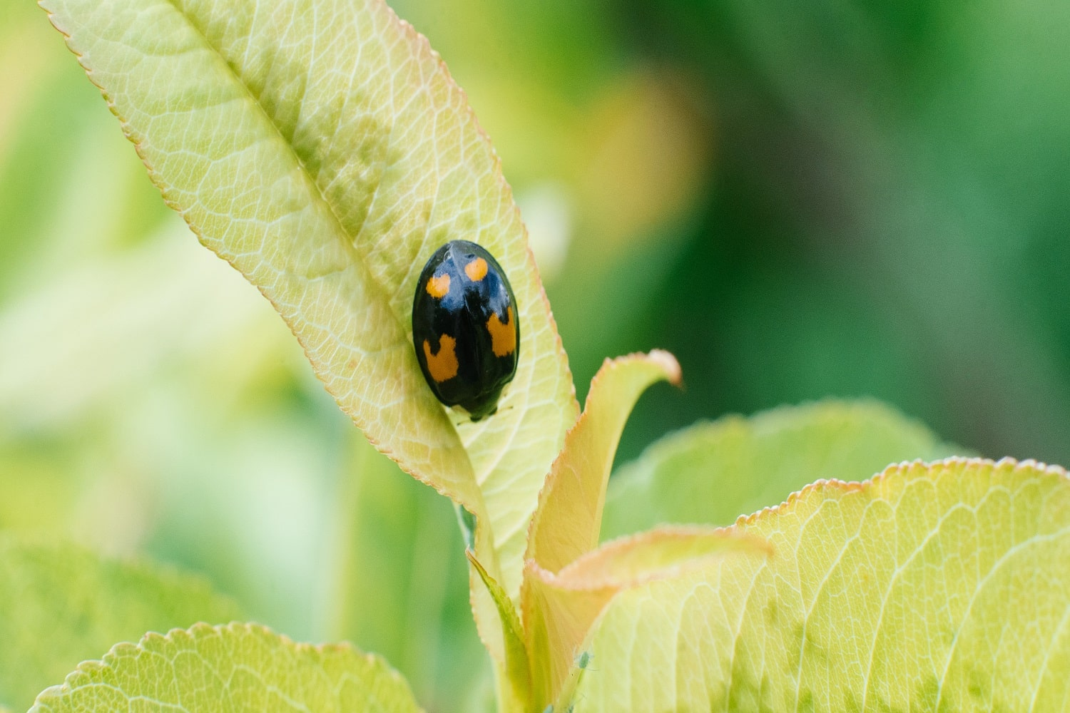 6 Different Types of Ladybugs