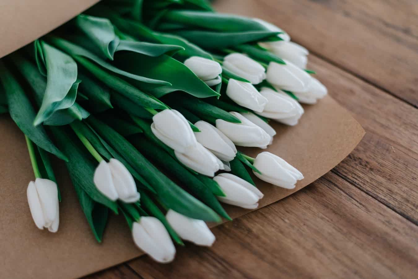 Why Tulips Dont Bloom What You Can Do Actually Works 6