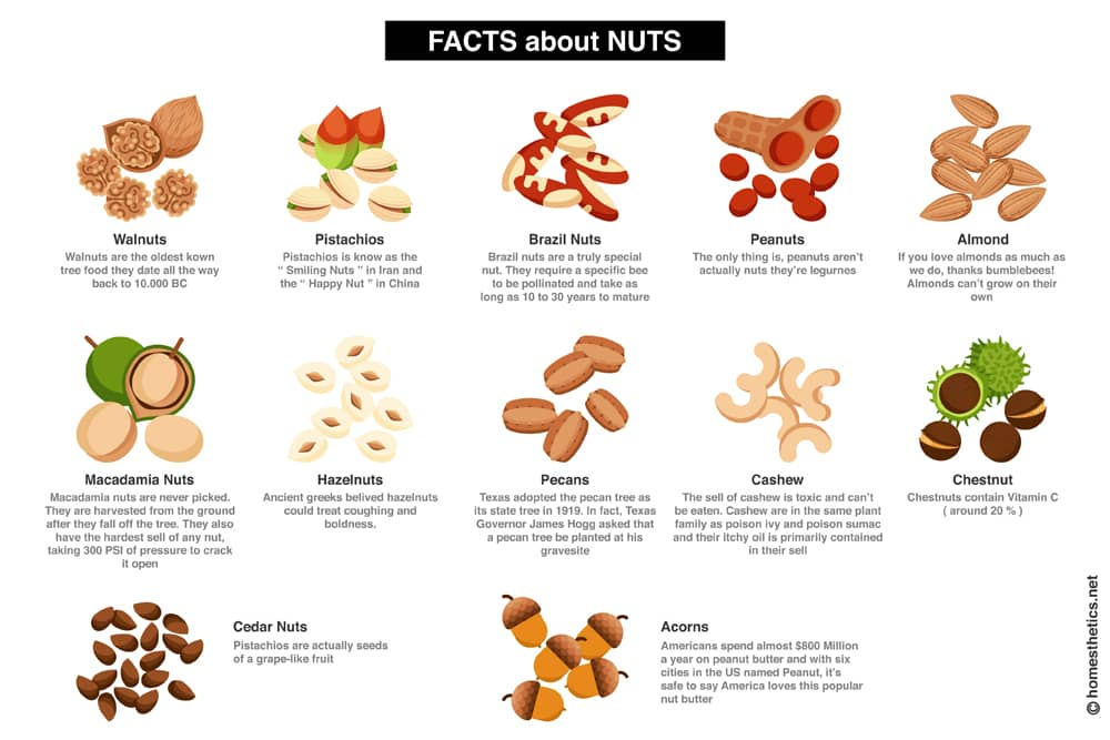 Z Fact About Nuts copy 1