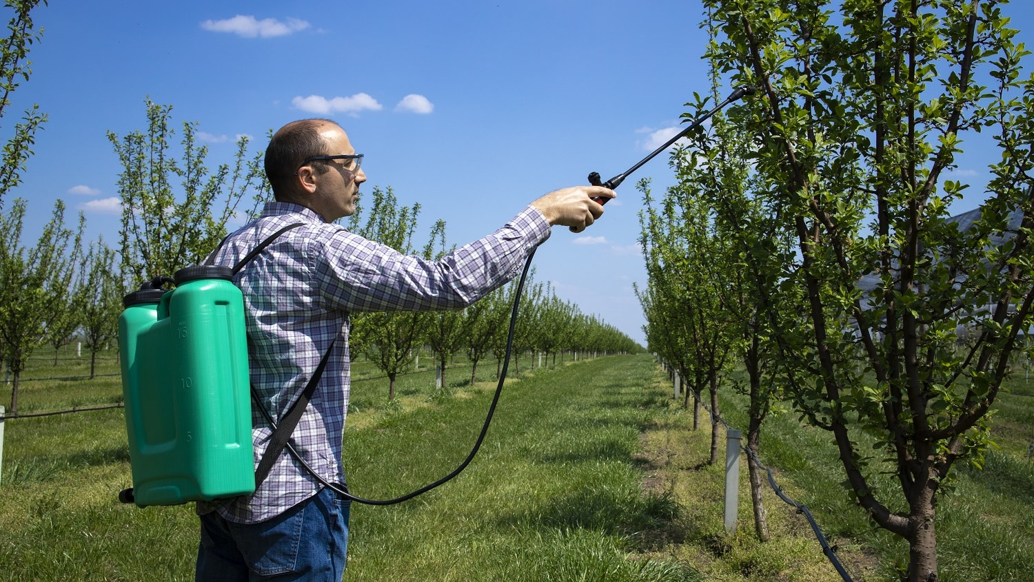 Man agronomist treating apple trees with pesticides in orchard.