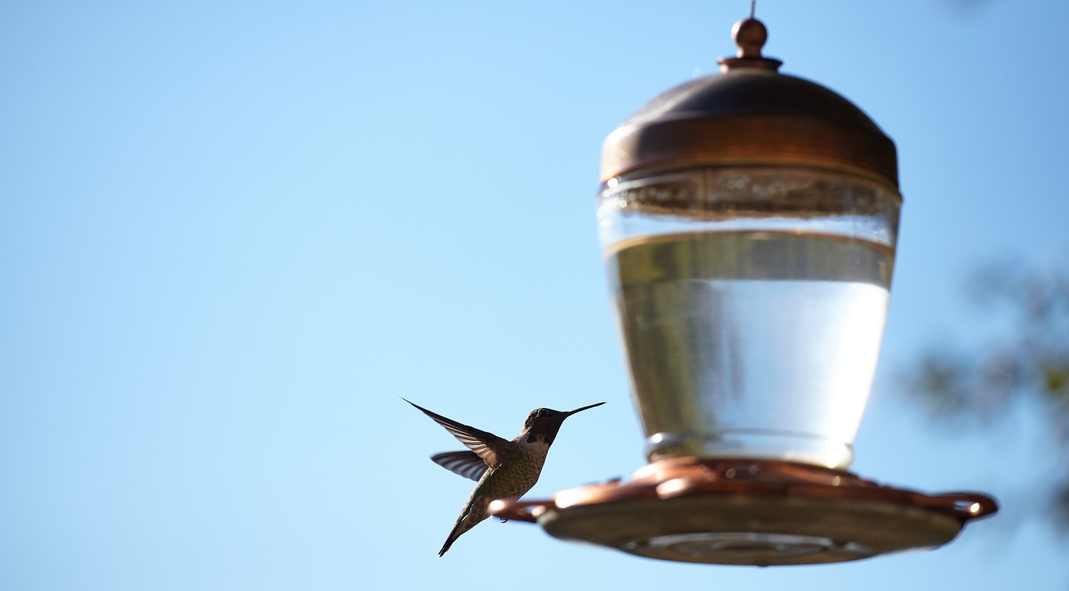 A closeup shot of a beautiful hummingbird sitting on a lamp with blurred background