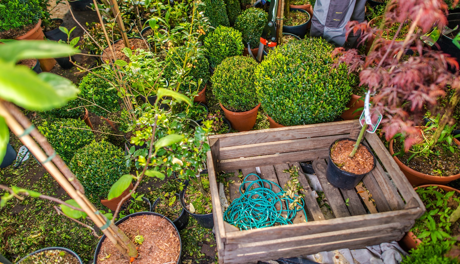 Landscaping Business Storage with Many Garden Decorative Plants, Wooden Crate and Tools