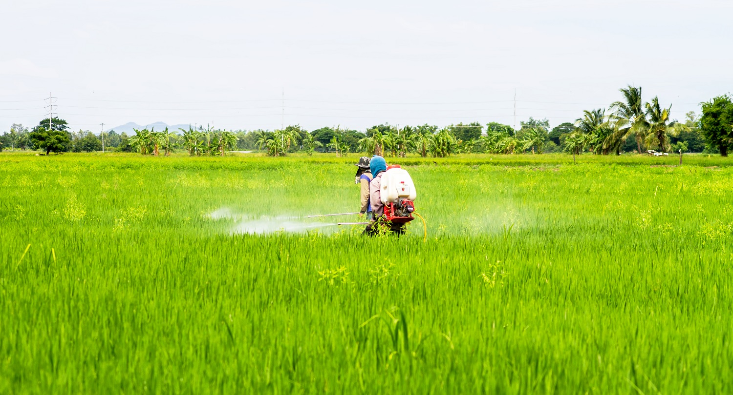 Farmers pesticides in the fields