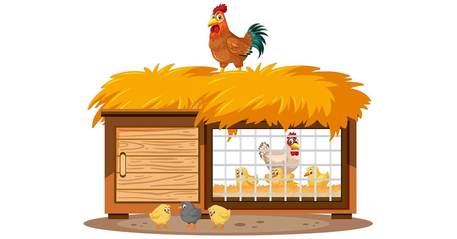 Chicken coops and chickens on white background illustration