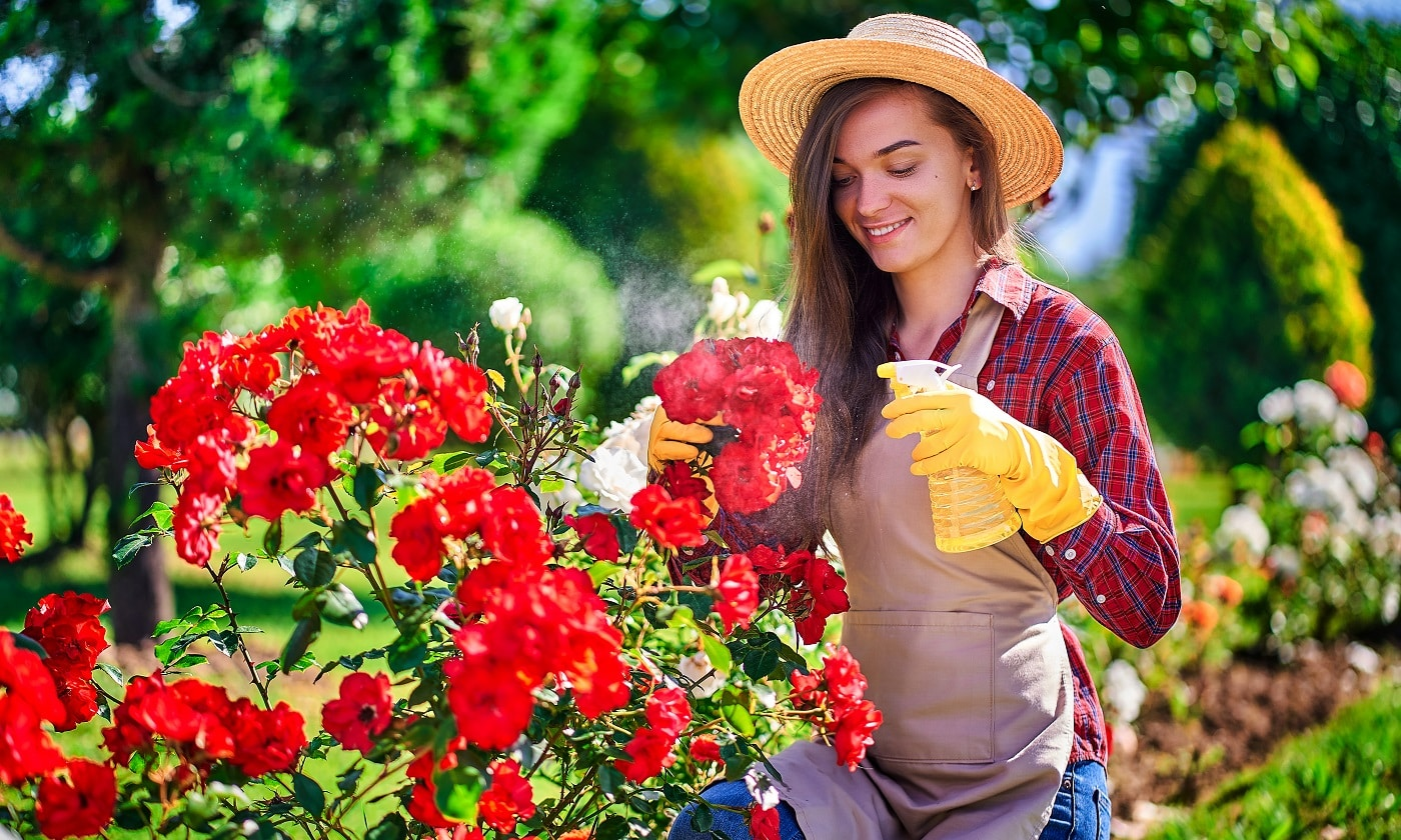 Attractive happy smiling woman gardener in straw hat, apron and yellow rubber gloves watering roses flowers with spray bottle and enjoys of gardening in backyard in sunny day
