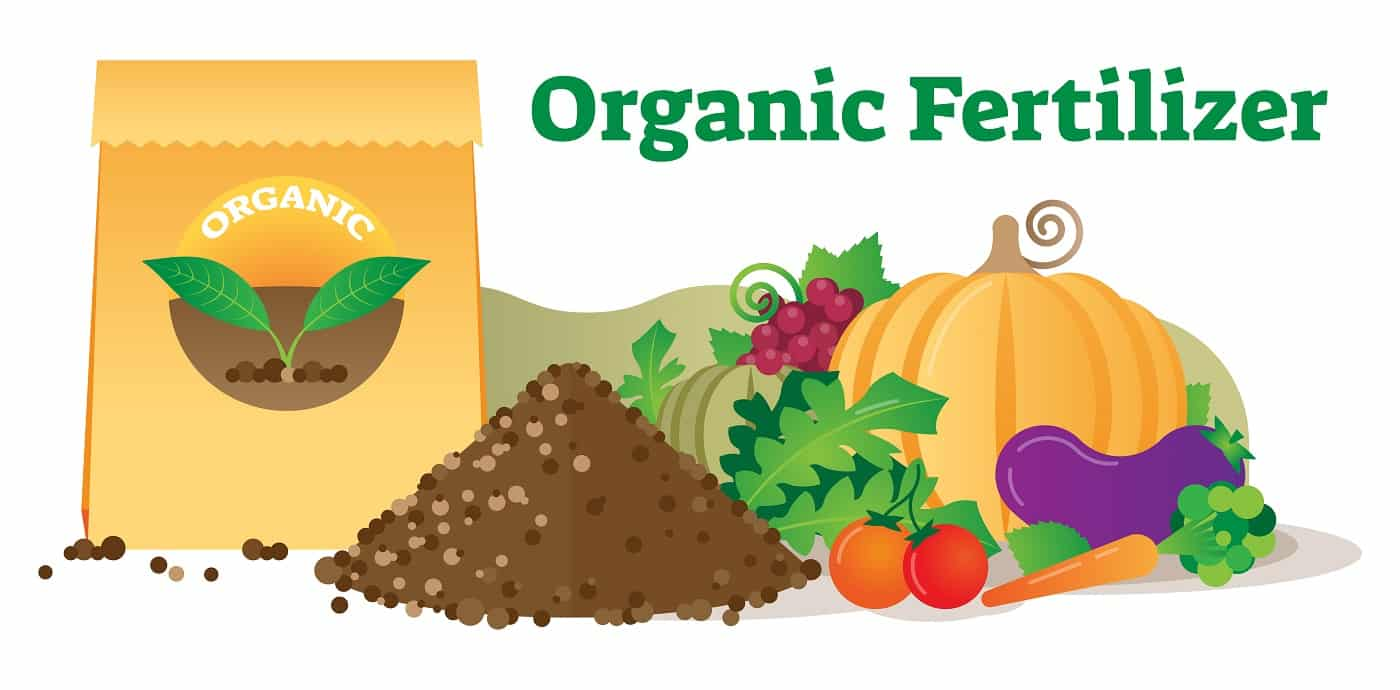Organic fertilizer conceptual vector illustration with package, leafs, soil and vegetables. Ecological agriculture farming.Natural and green thinking for human health.