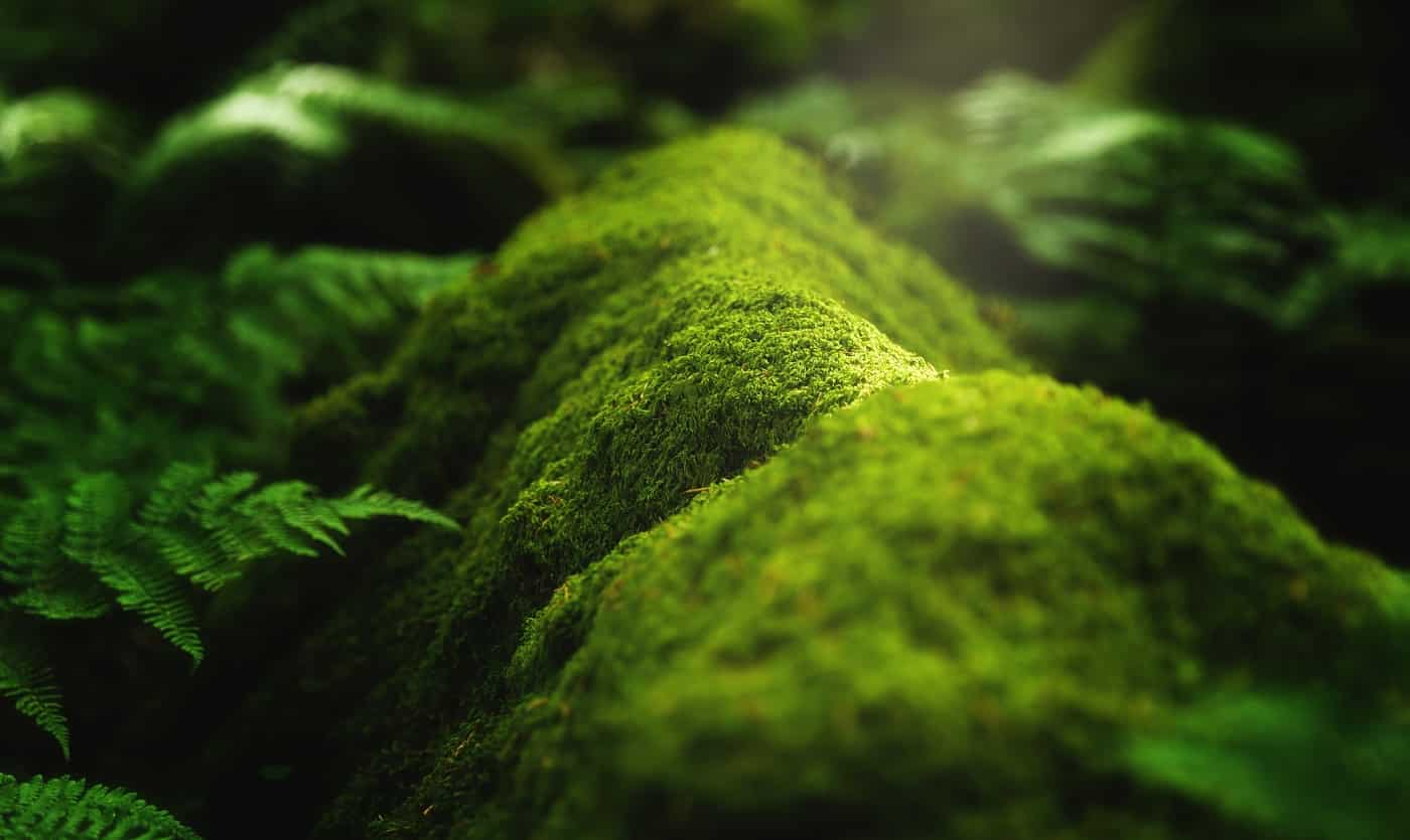 A closeup shot of moss and plants growing on a tree branch in the forest