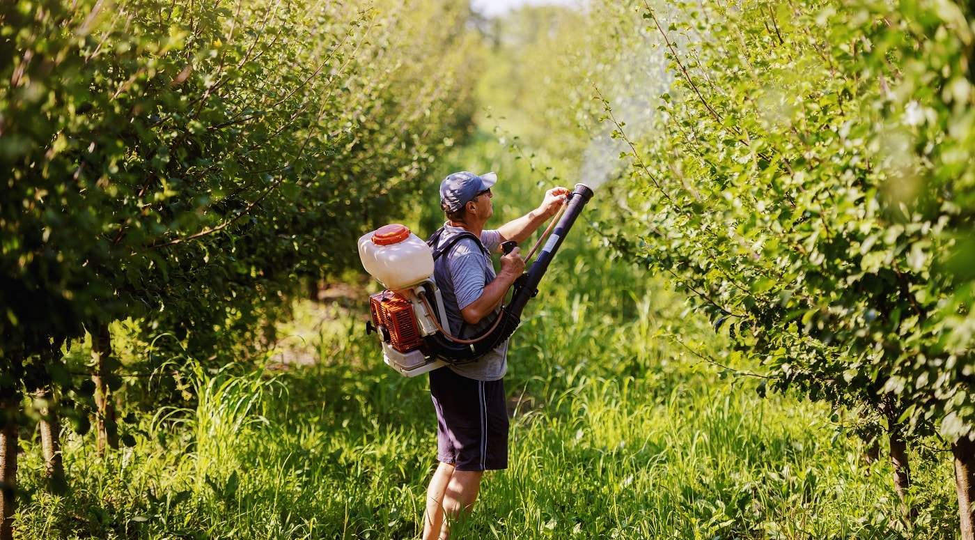 Rear view of Caucasian mature peasant in working clothes, hat and with modern pesticide spray machine on backs spraying bugs in orchard.