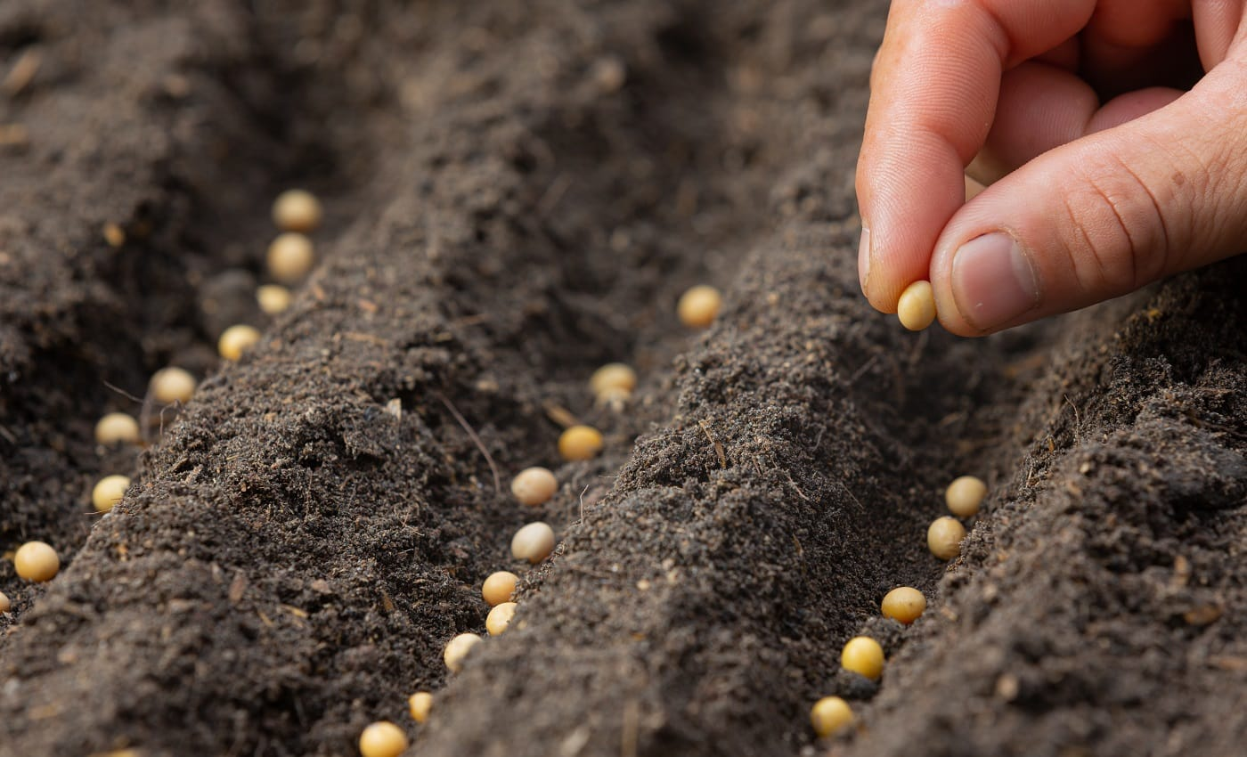 close up picture of hand holding planting the seed of the plant