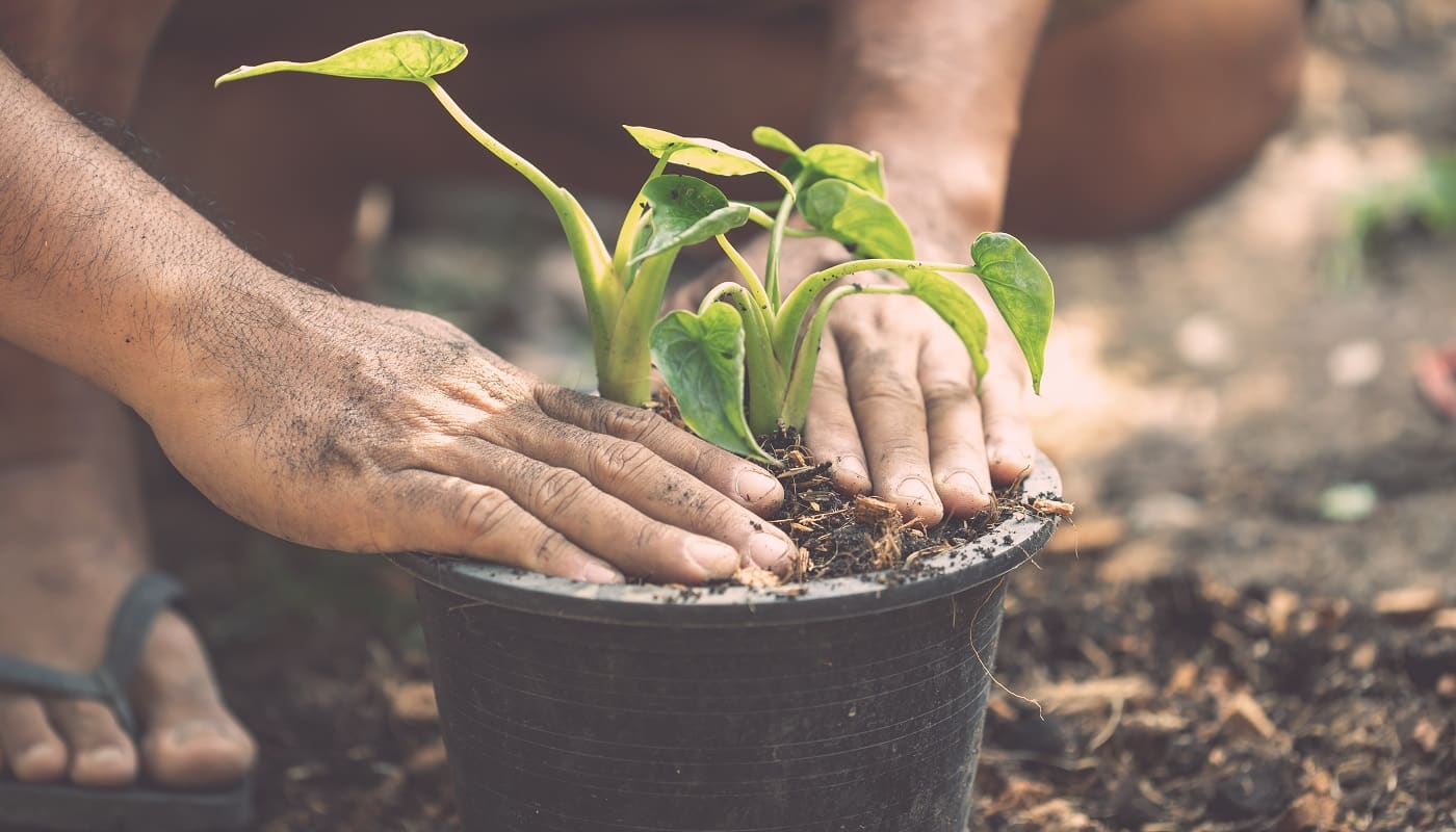 Close up people planting green plant to plastic pot in the garden. Home and garden decoration concept