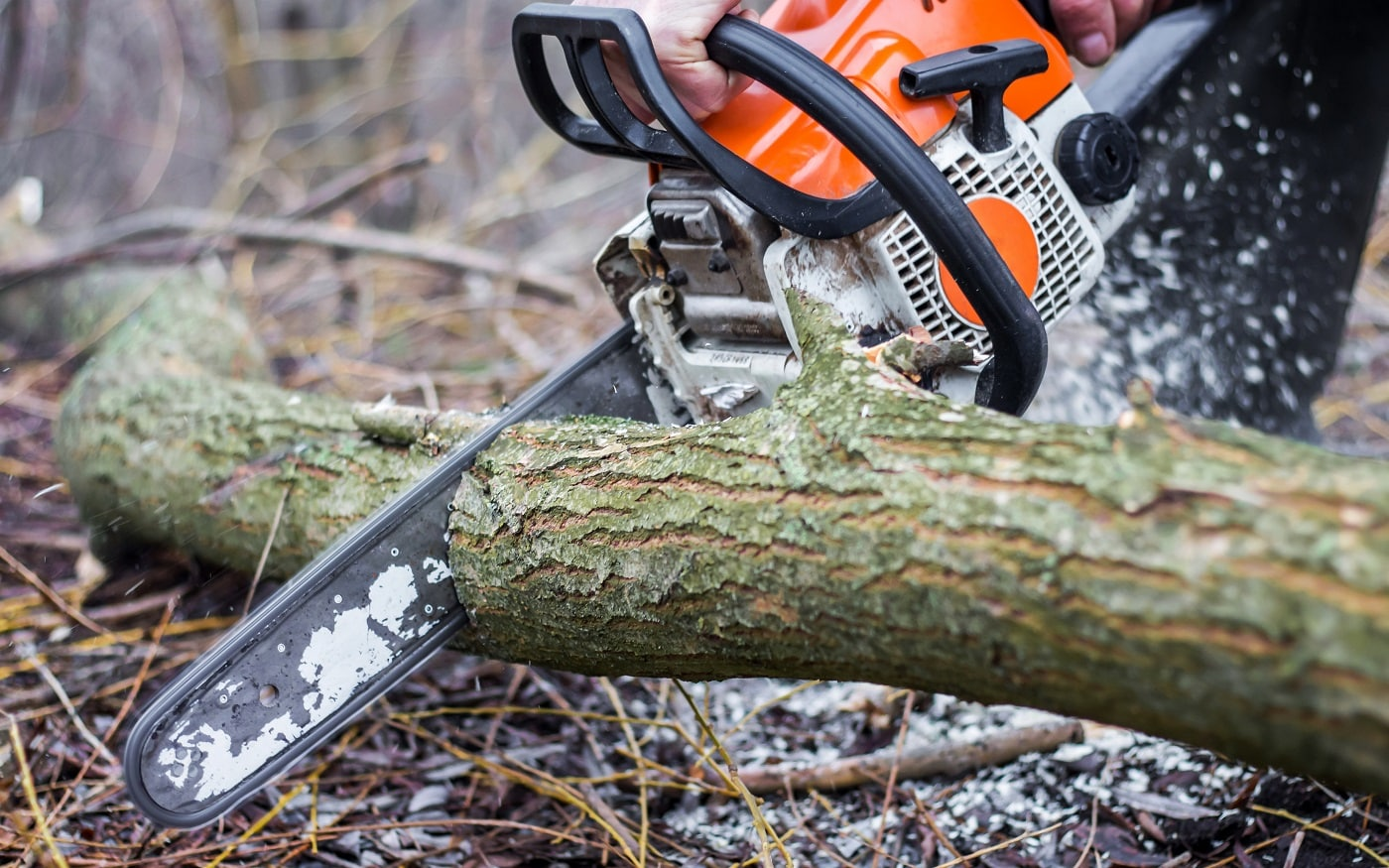 A man using a chainsaw saws a log in a forest