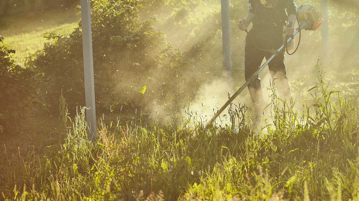 work to mow the grass trimmer. process of mowing tall grass with a trimmer. selective focus on uncut Tawa and scatter particles of cut grass. evening lights make their way through the fog. copy space