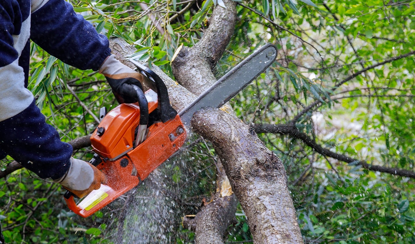 Broken the trunk tree after a hurricane of man is cutting a tree with a chainsaw