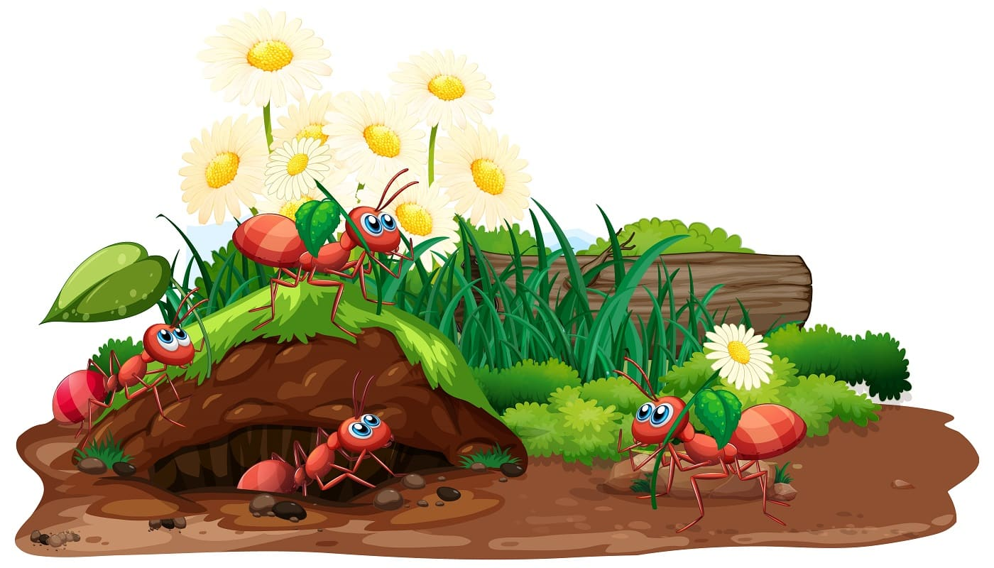 Scene with ants and flowers in the garden illustration