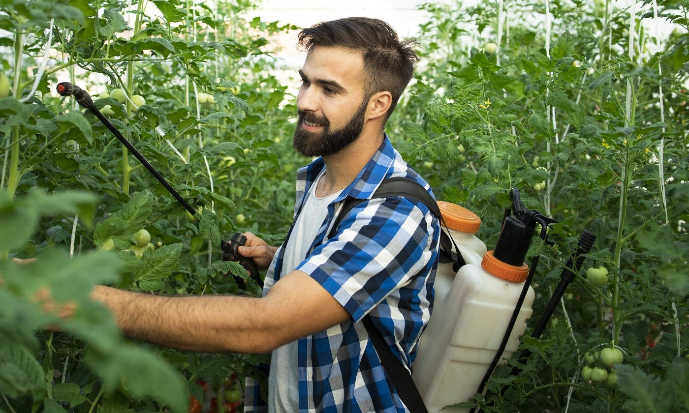 Young bearded farmer worker spraying plants with pesticides to protect against disease.