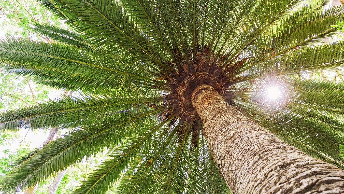 Best Fertilizer for Palm Trees of 2020 01