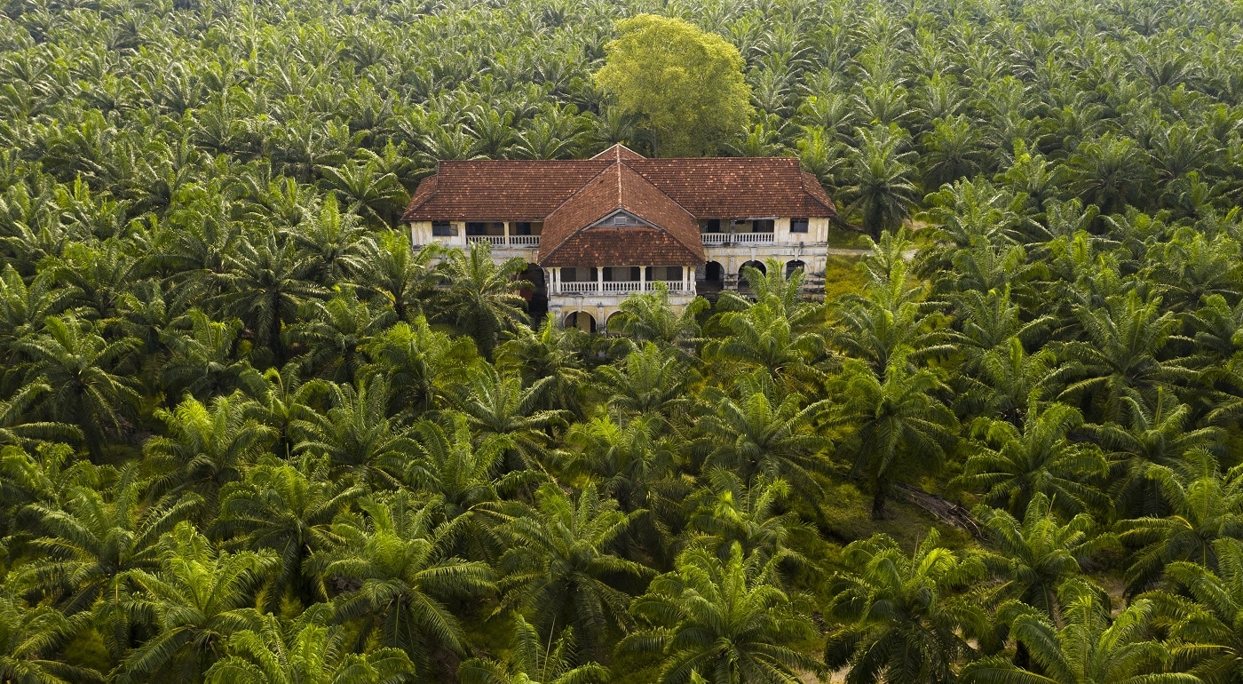 A palm tree plantation in South East Asia, with an abandoned mansion residing in the centre of it. The trees are used for Palm Oil production.