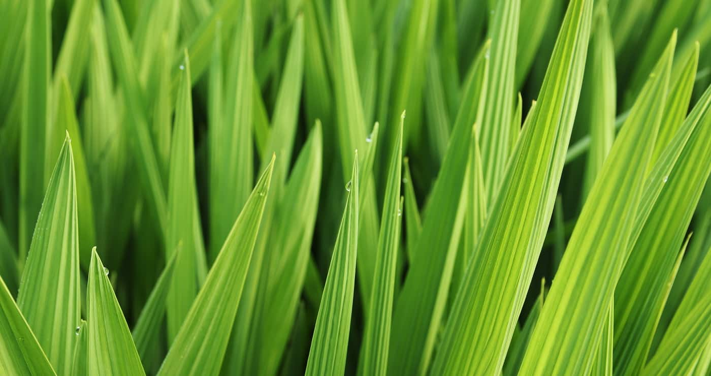 A closeup shot of beautiful green leaves and grass covered in morning dew