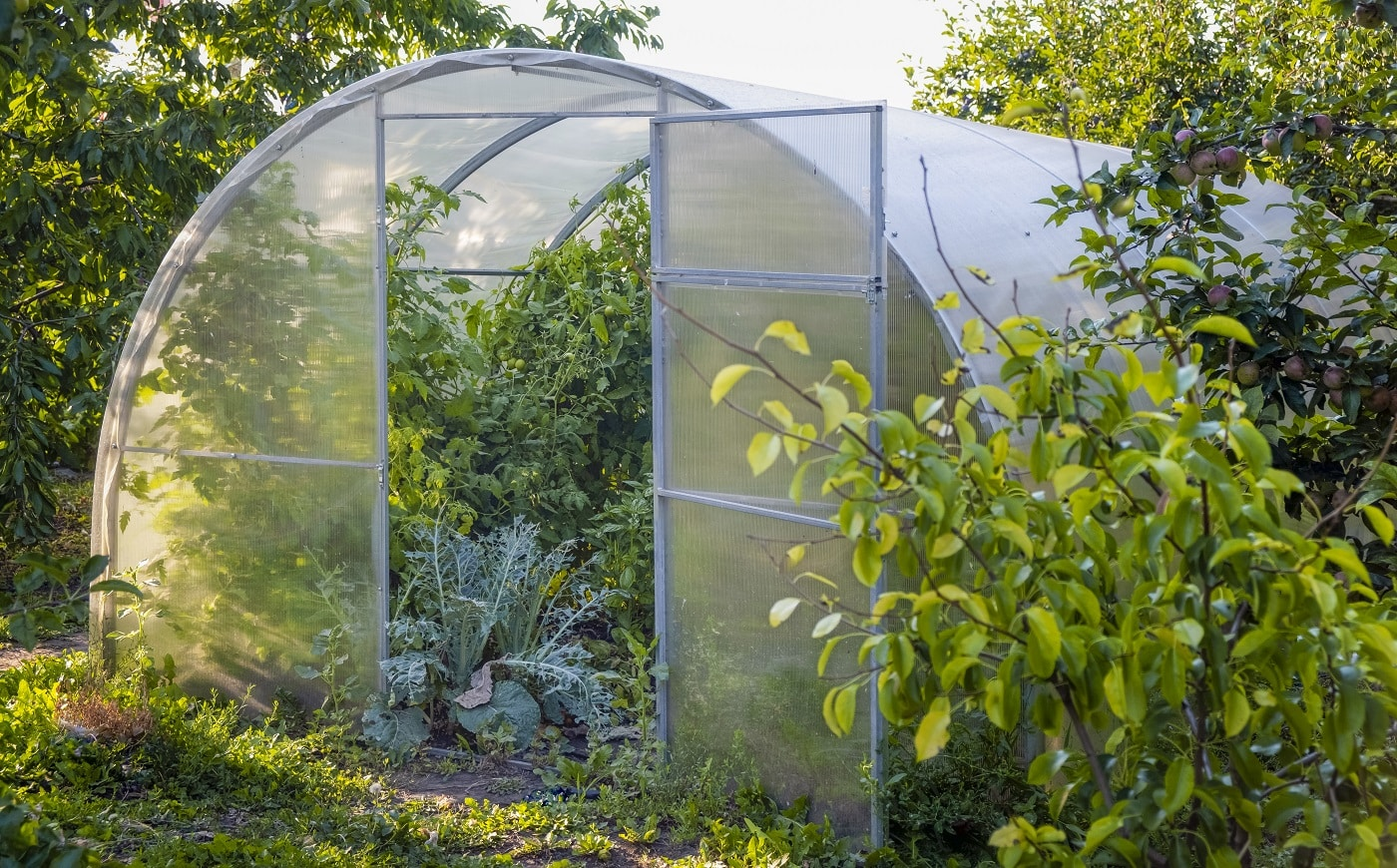 Greenhouse. Organic food. Open greenhouse with tomatoes in the middle of the vegetable garden