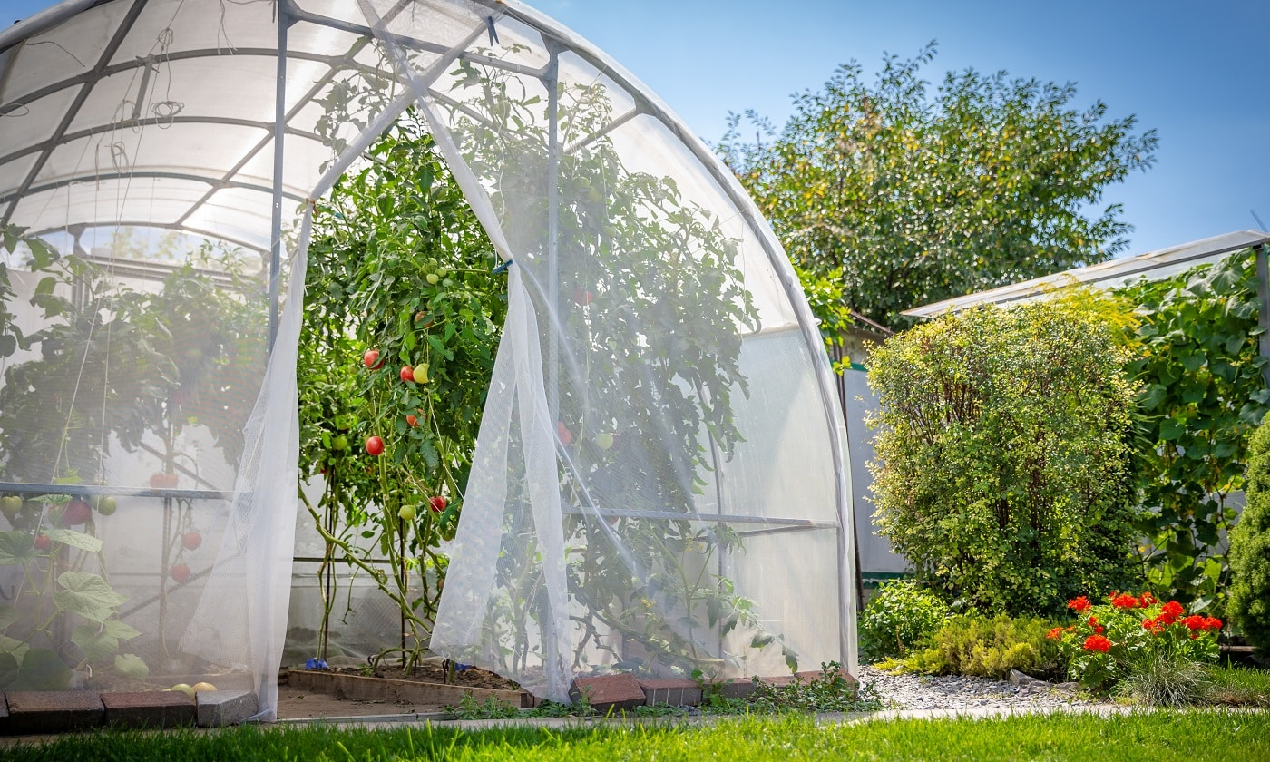 warm house with tomatoes in private garden in back yard with green lawn