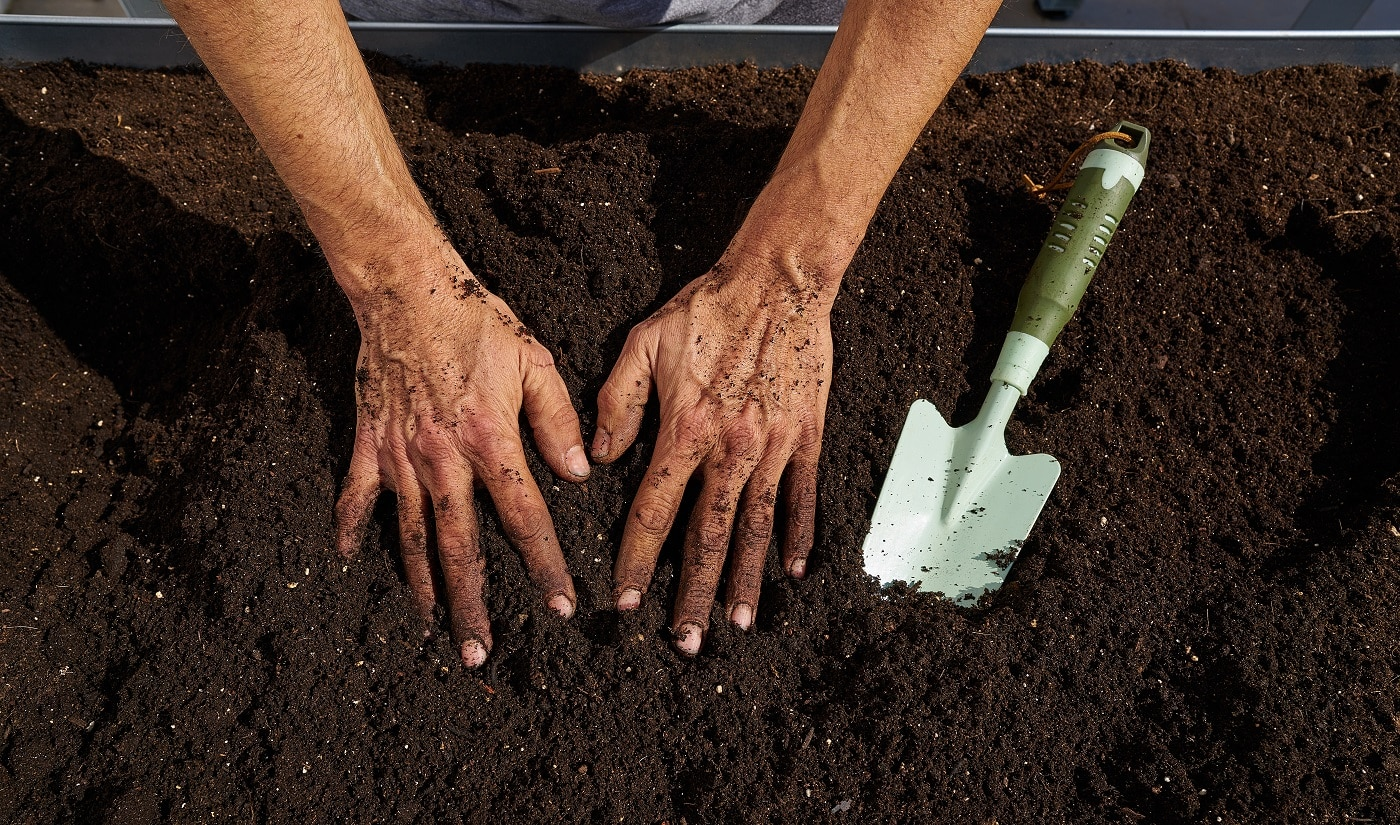 Farmer man hands dirty on substratum of urban garden orchard in raised bed