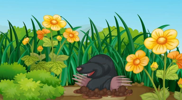 Scene with mole in the garden illustration