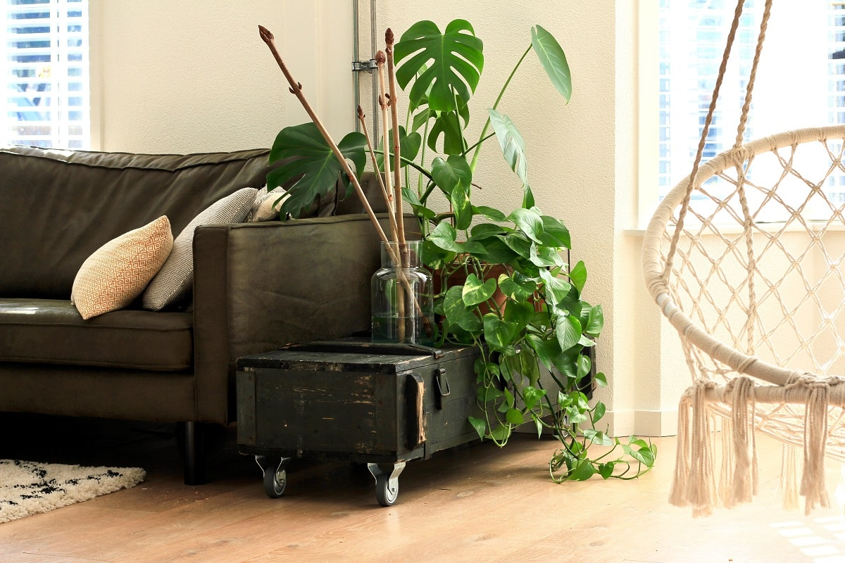Best Air Purifier for Cigarette Smoke 2